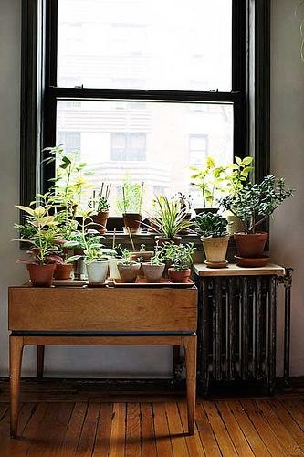 jardin table fenetre
