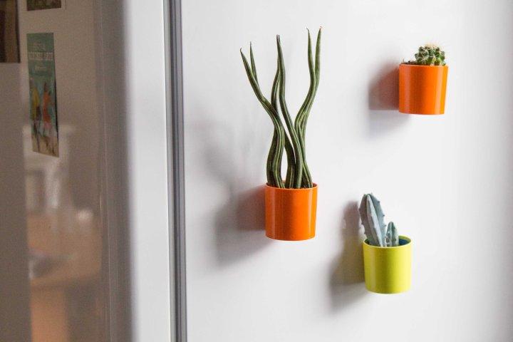 DIY : le mur decactus